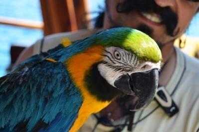 allevamento artificiale pappagalli