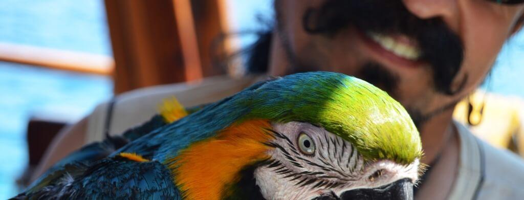 allevamento allo stecco pappagalli
