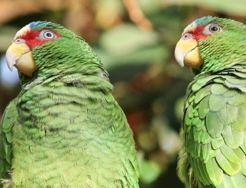La riproduzione dei pappagalli