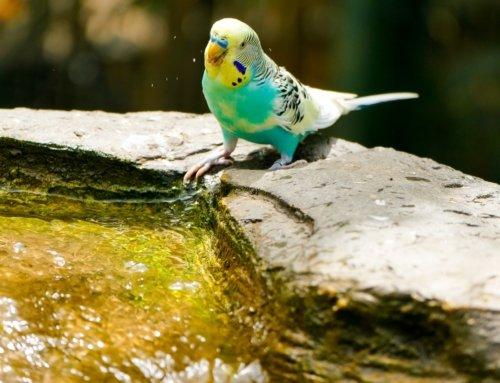 Igiene del pappagallo: come pulire la gabbia e perché è importante