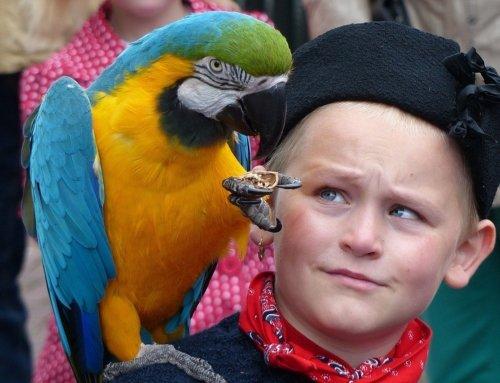 Alcuni consigli su come addomesticare un pappagallo